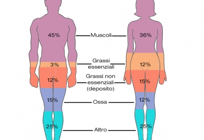analisi-composizine-corporea