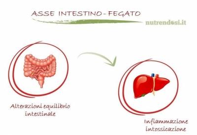 intestino_fegato